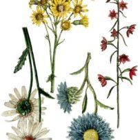 IODWildflower